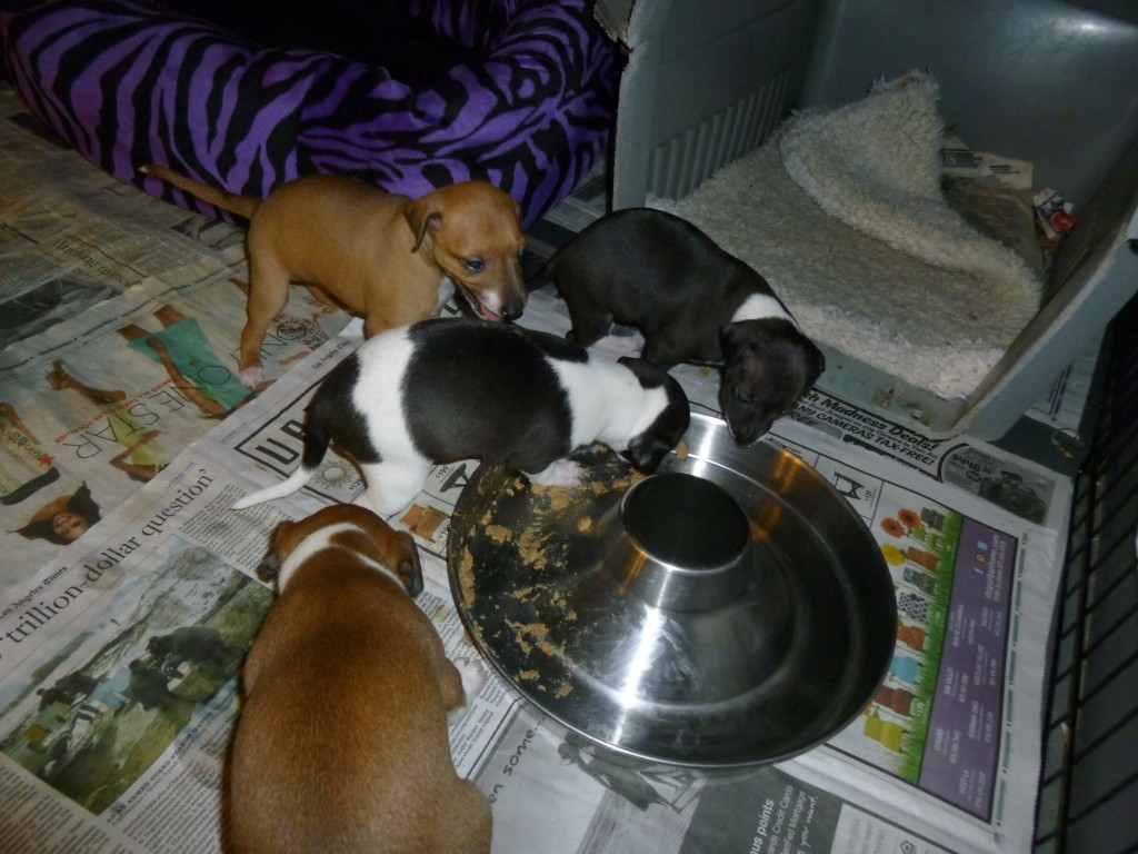 May 9, 4 puppies eating