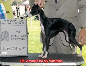 CH Amore's Be My Valentine