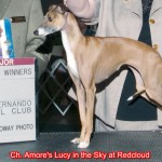 CH Amore's Lucy In The Sky At Redcloud