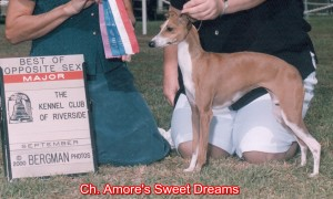 CH Amore's Sweet Dreams