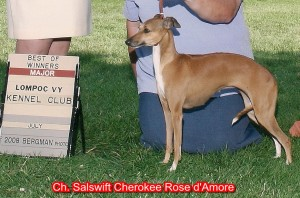 CH Salswift Cherokee Rose D'Amore