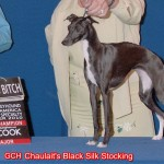 GCH Chaulait's Black Silk Stockings