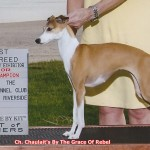 GCH Chaulait's By The Grace Of Rebel