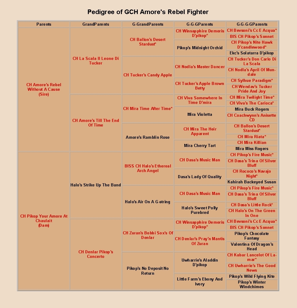 Pedigree of Amore's Rebel Fighter, cropped