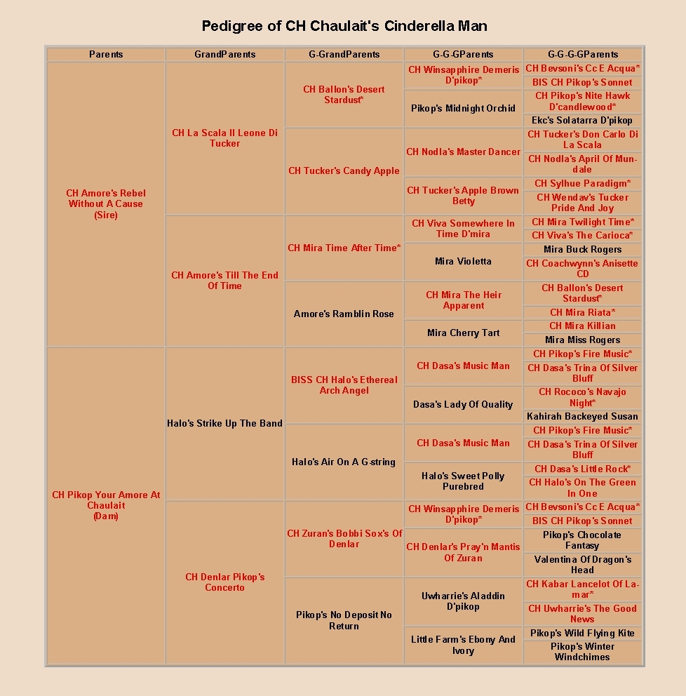 Pedigree of Chauliat's Cinderella Man, cropped