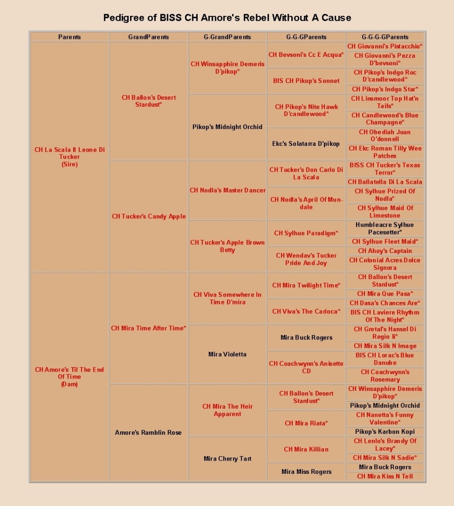 pedigree of amore's rebel without a cause, cropped