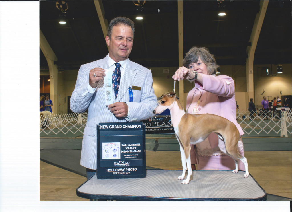 Chaulait's By The Grace Of Rebel GCH redone