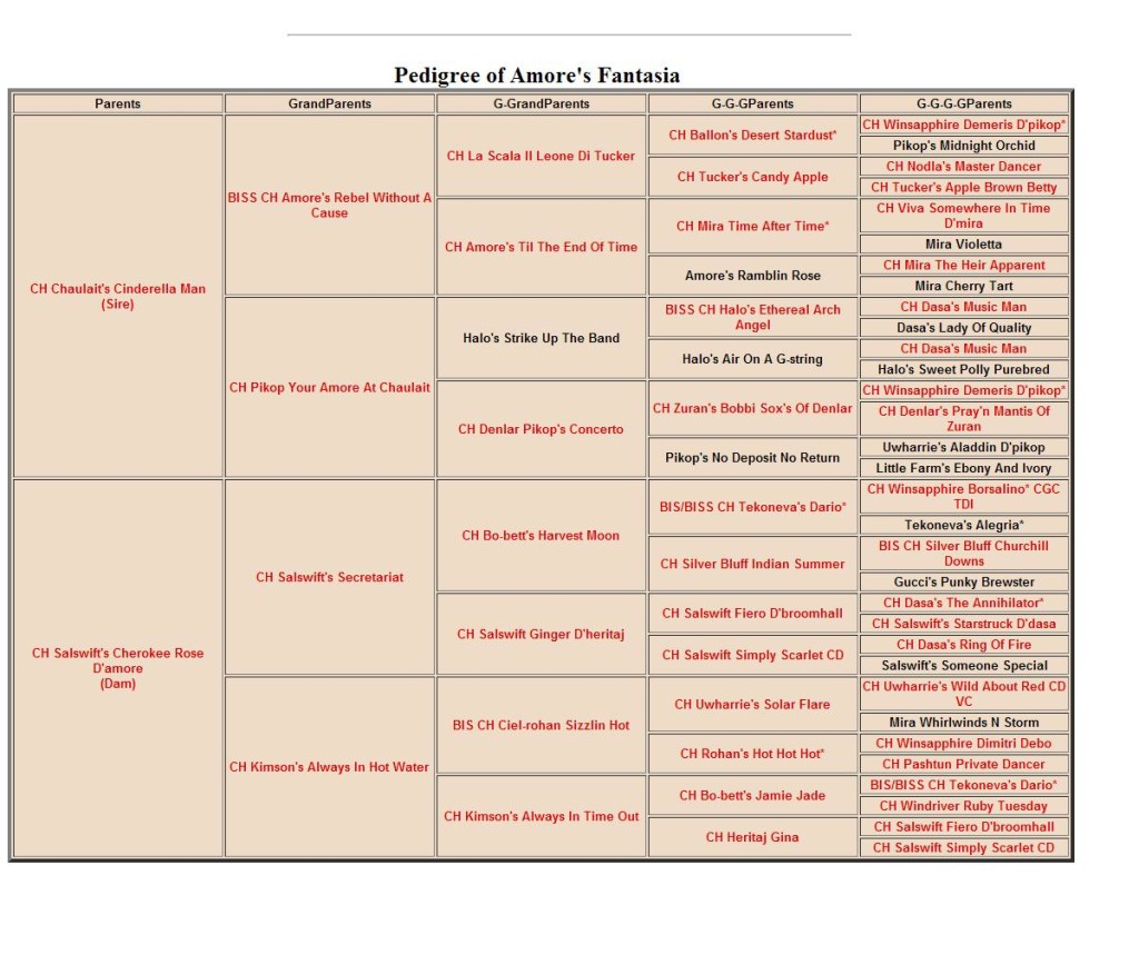 pedigree of amore's fantasia 2