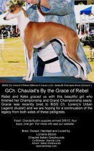 Gracie ad color (1)-page-0